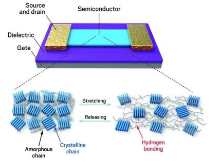ilk-kez-dogru-elektronik-ozelliklere-sahip-yari-iletken-esnek-bir-polimer-olusturuldu1